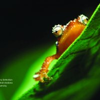 FORCLIME Photo Contest 2011_Biodiversity Special Award